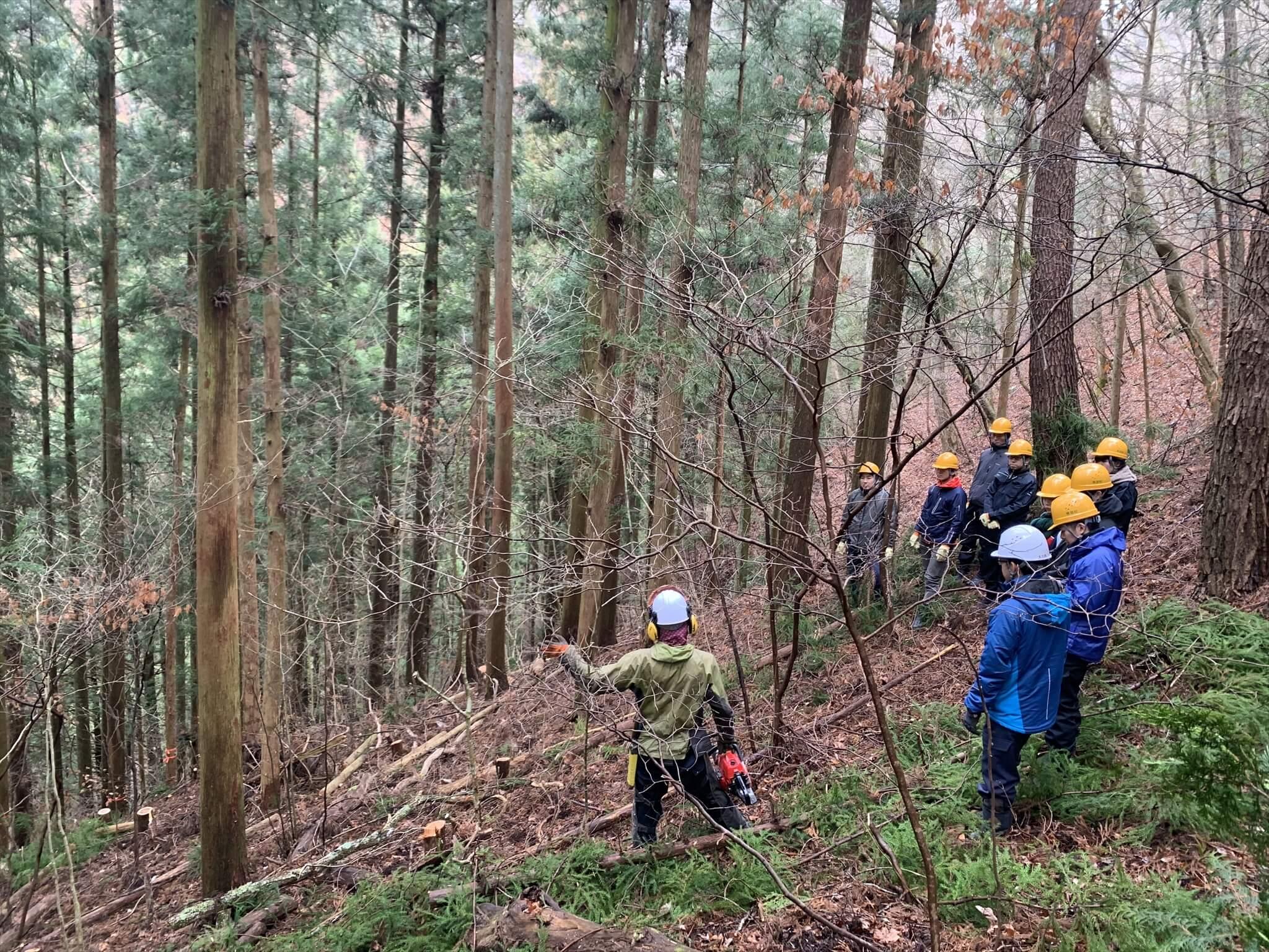 根羽村で行われた林業ツアーの様子