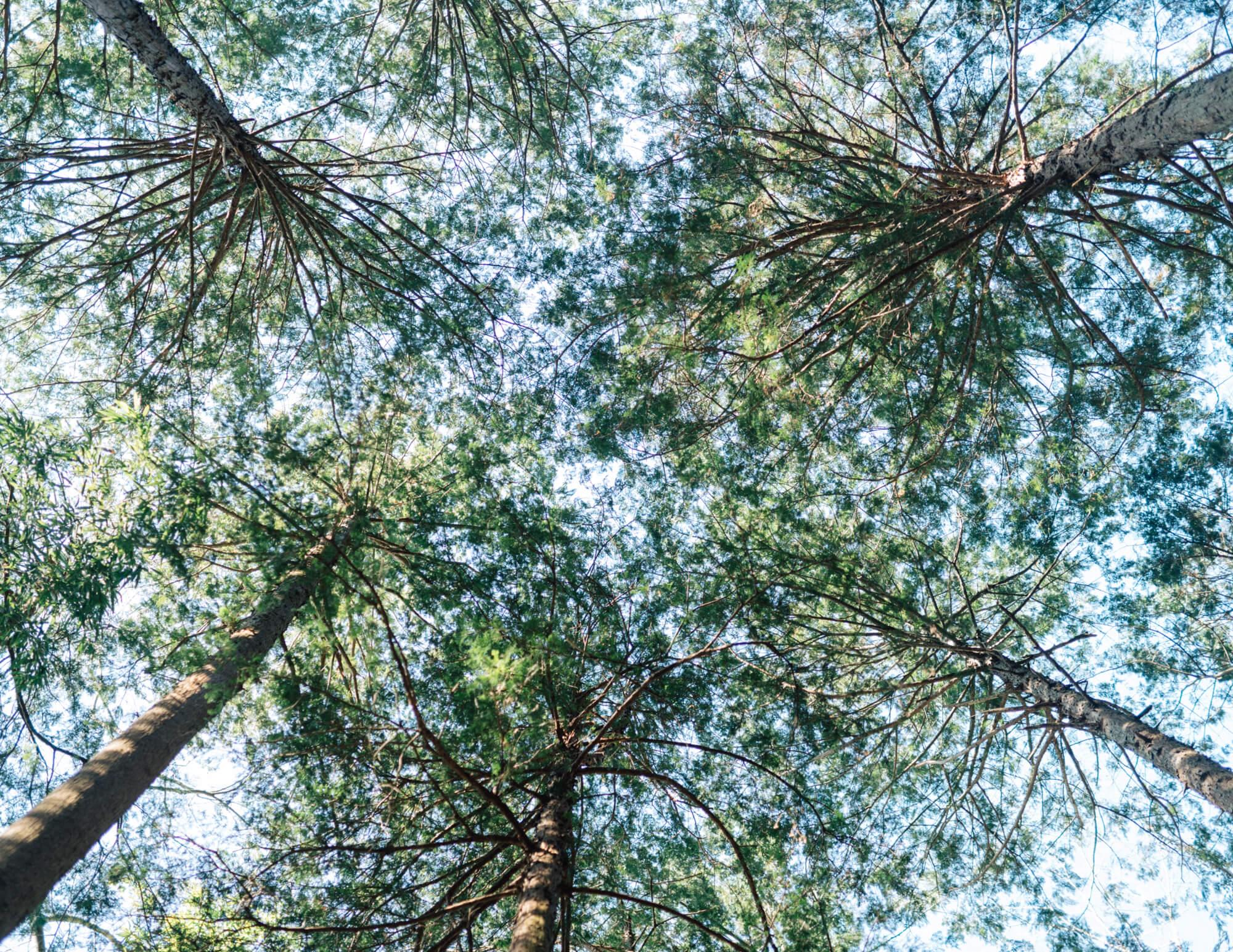 森林内で空を見上げると