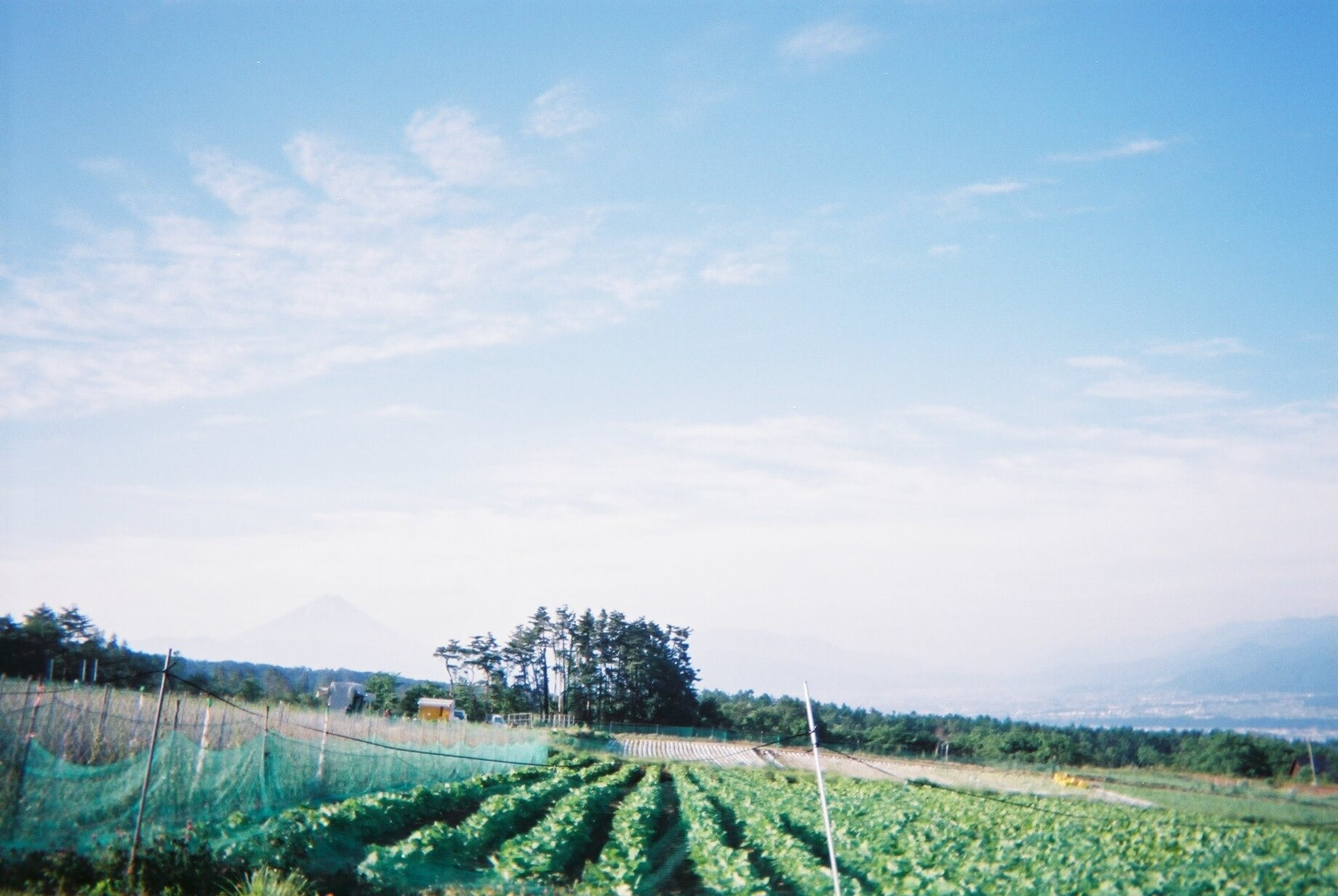 自宅前の広大な畑