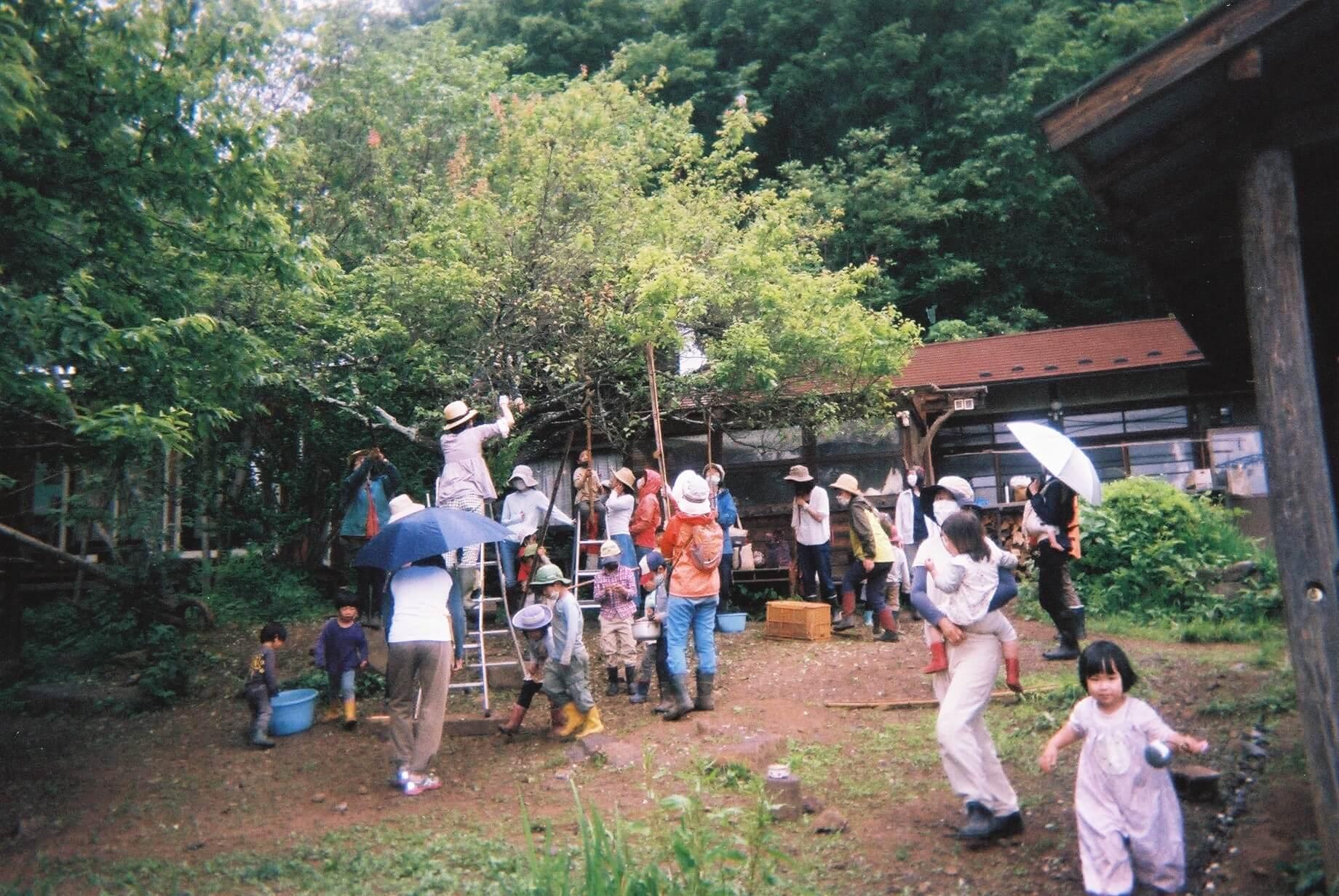 自然保育の幼稚園