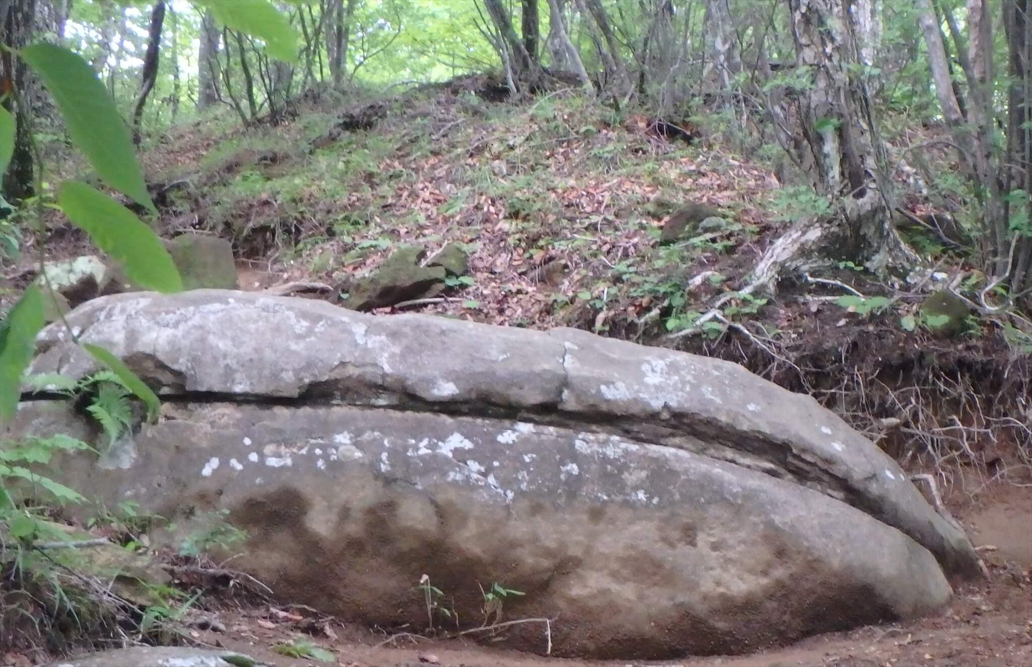 都民の森でマカロンのような岩を発見!