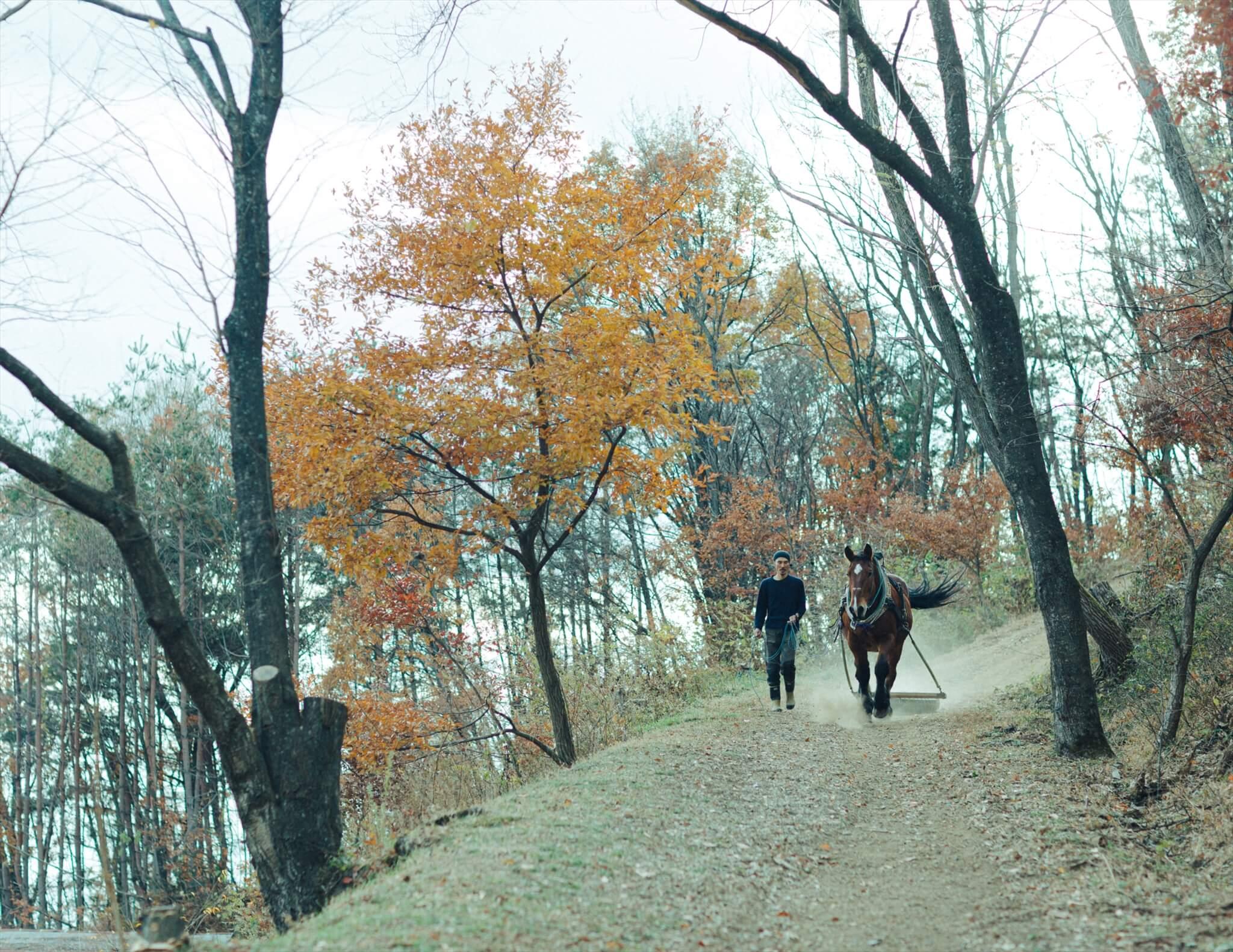 馬搬(馬の力を借りて木材搬出)に向けて練習中