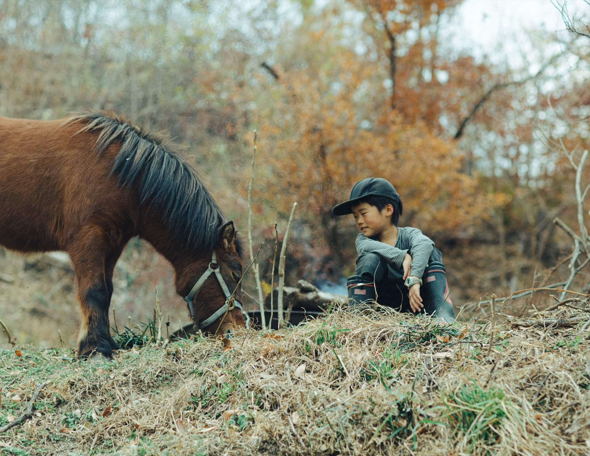 子馬と子ども
