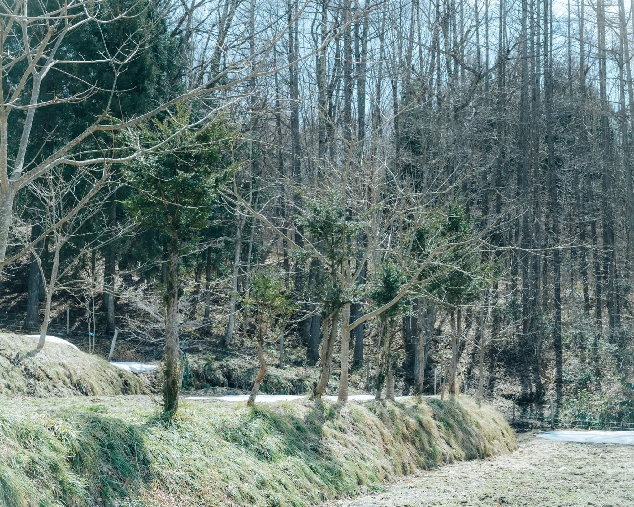 のっぺ山荘の裏の畑。キハダが土手に横一列に植えられている