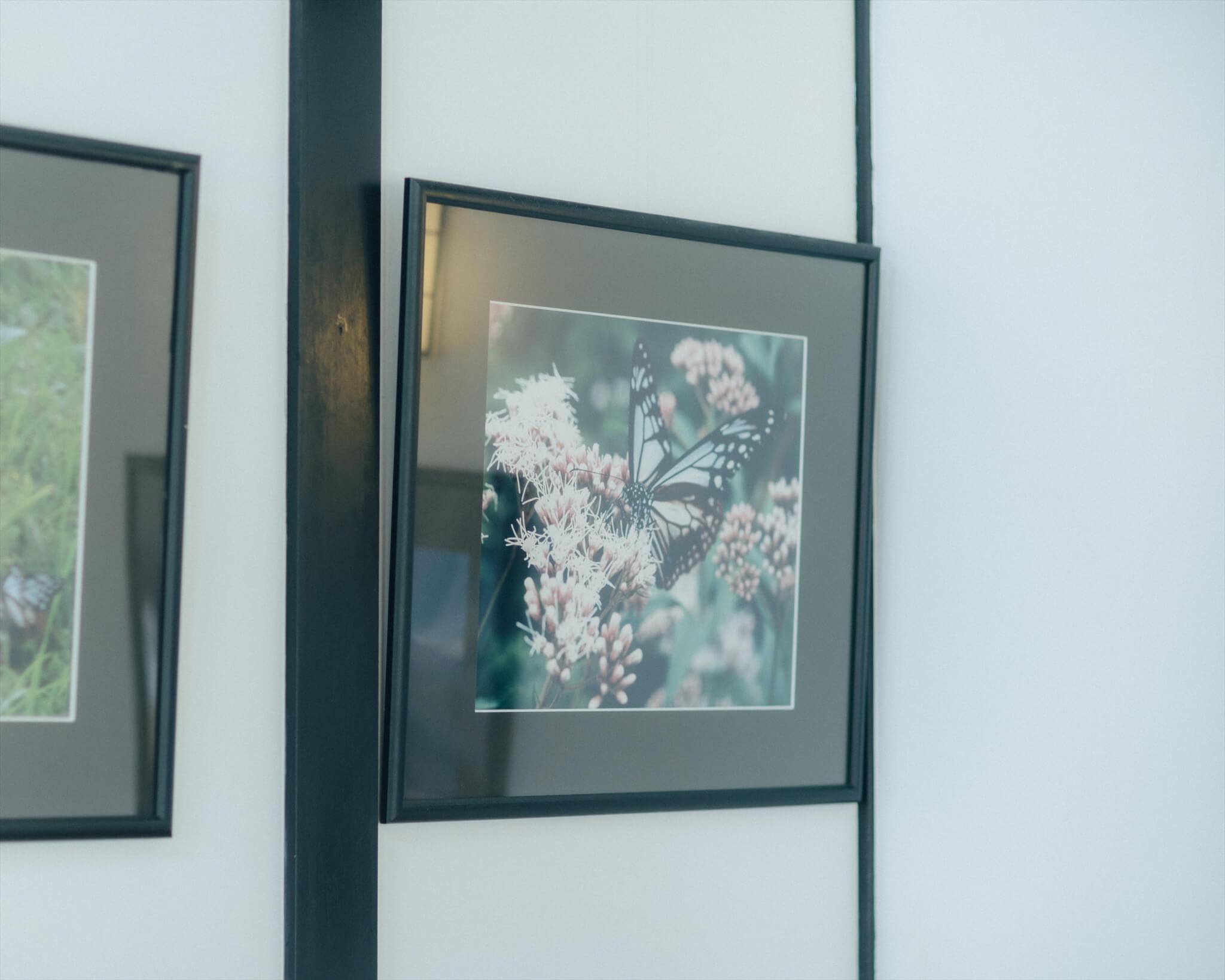 のっぺ山荘の中に飾られていた吸蜜するアサギマダラの写真