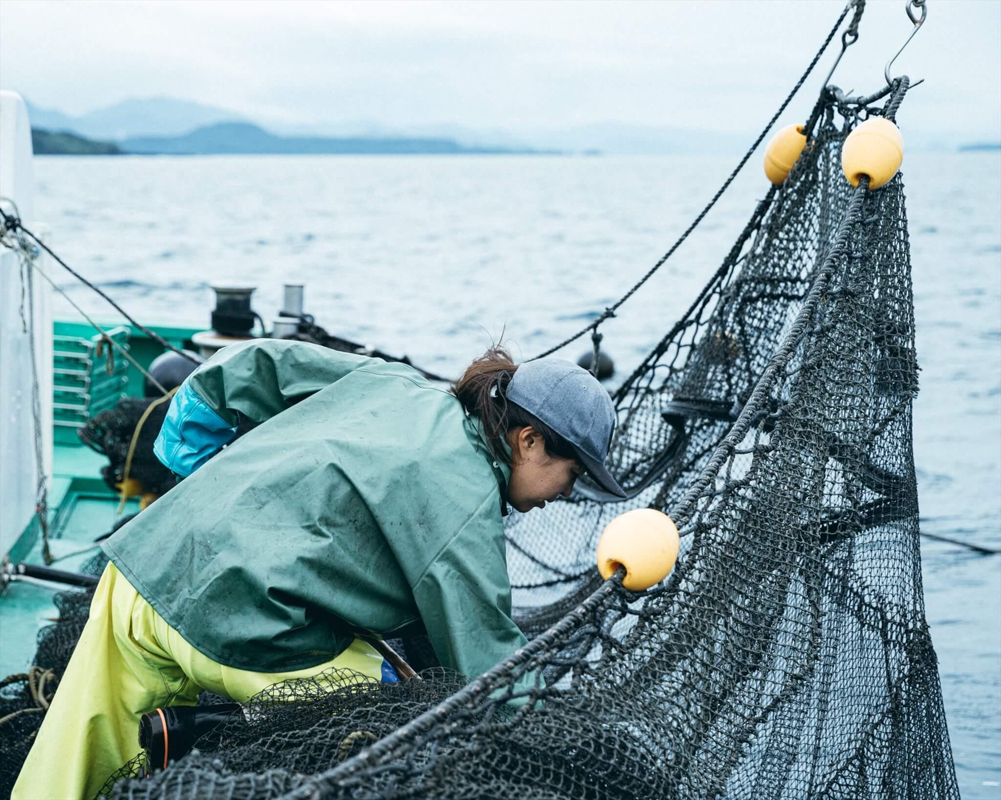 引き上げた定置網からタモ網で魚をすくいとる