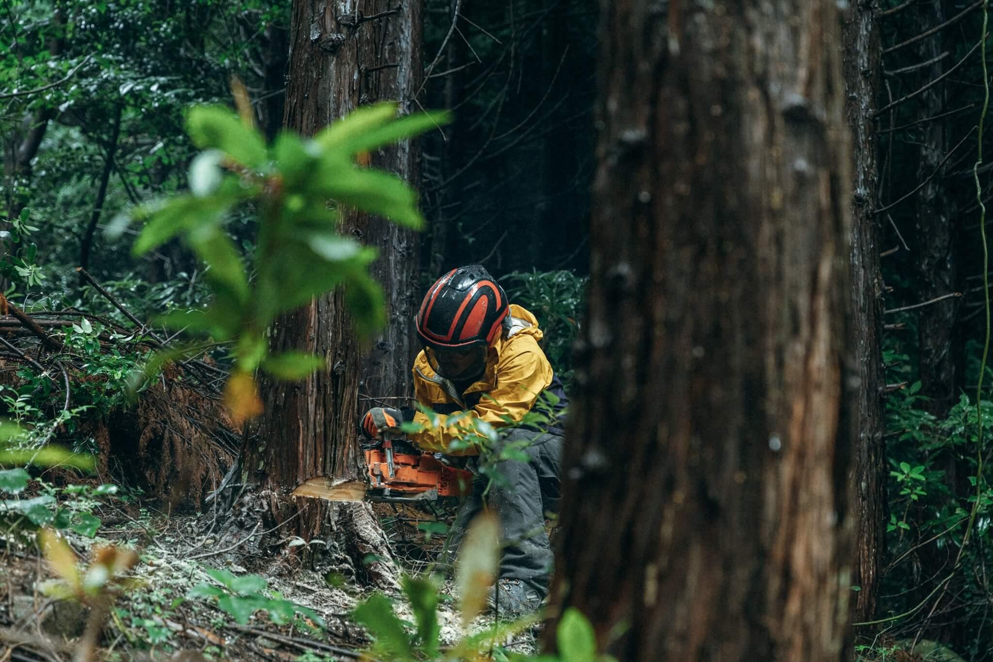 阿武町の林内で伐採