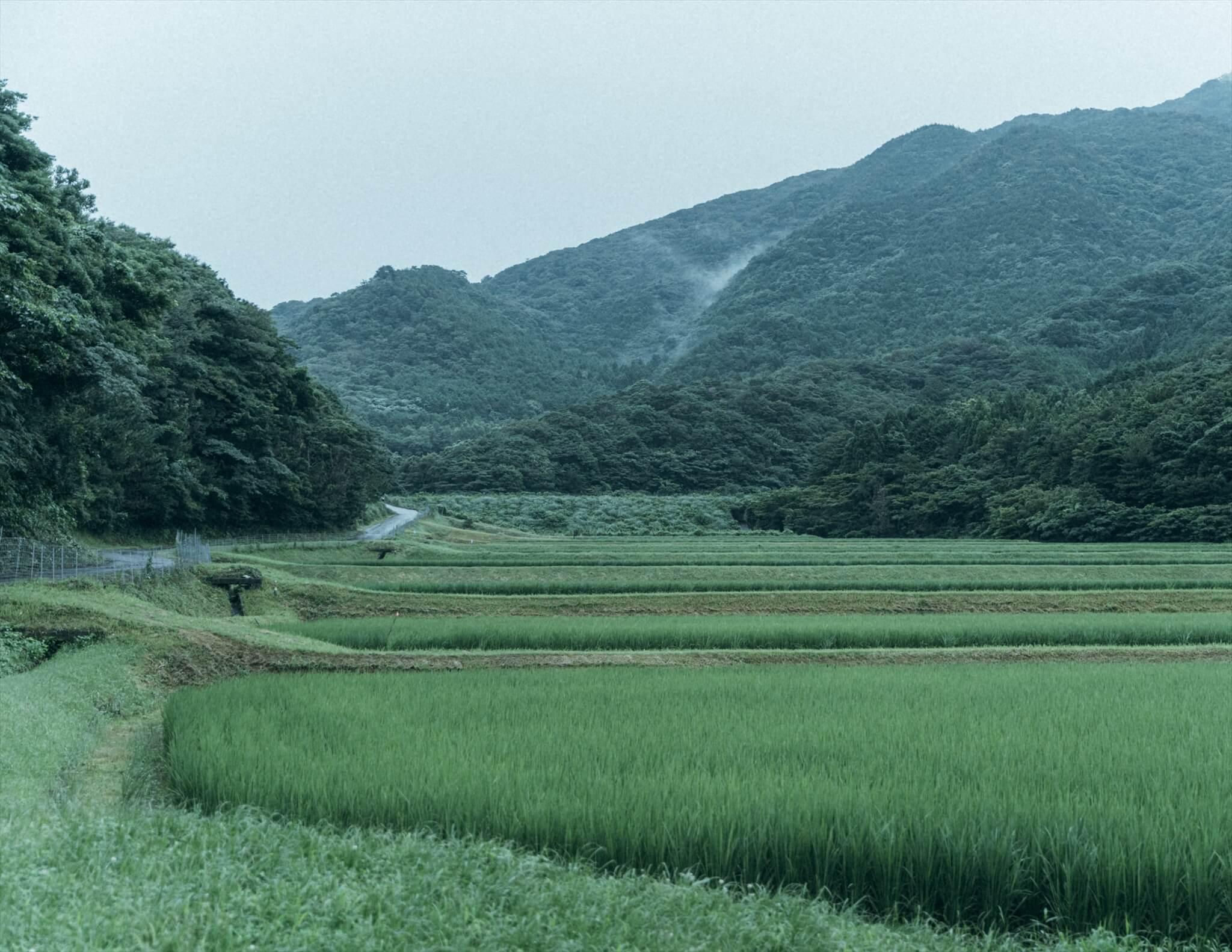 阿武町の田園風景
