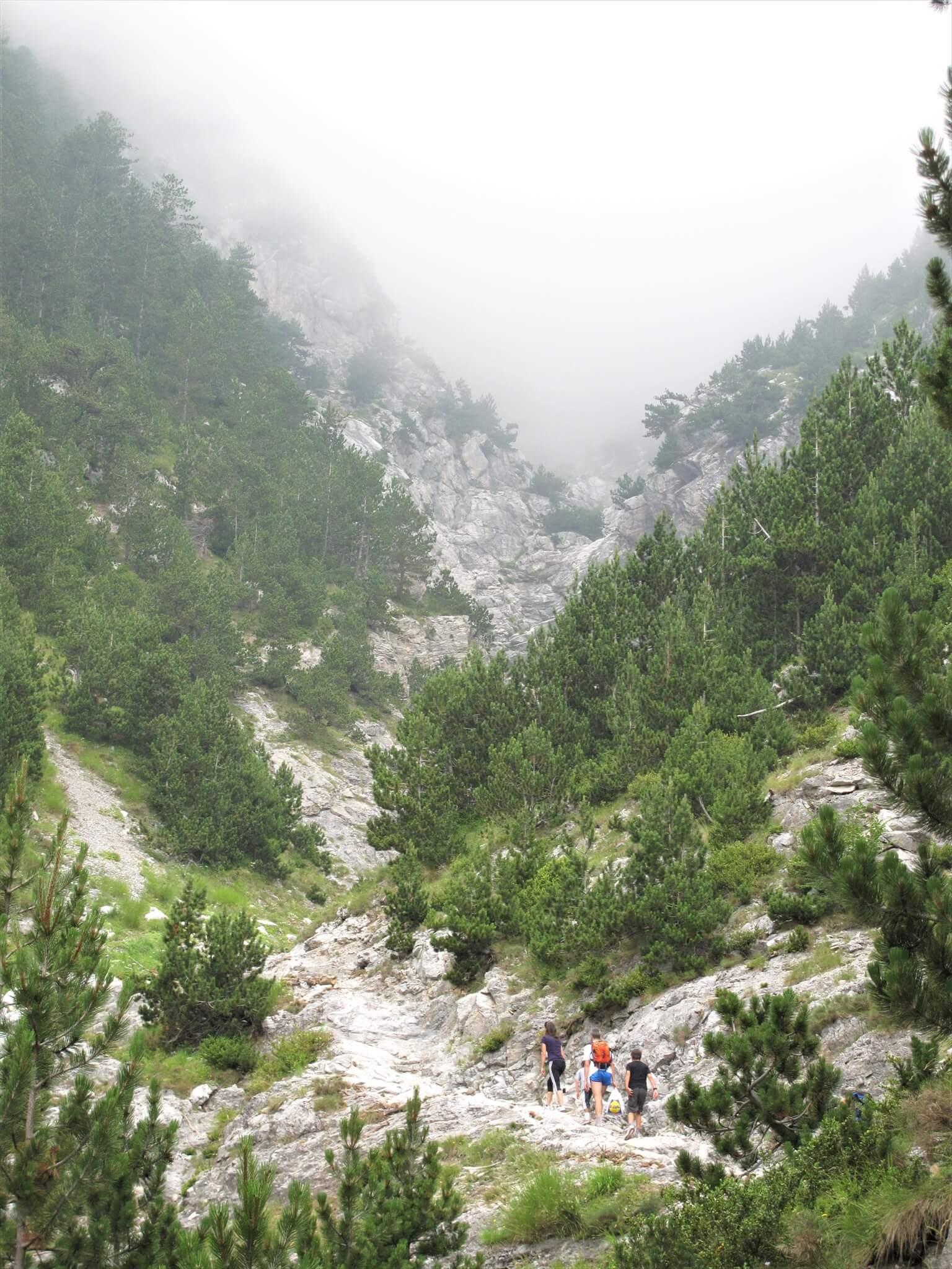 松の木と白い岩の道